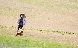 女の子と犬の追いかけっこの写真・画像素材[2318999]
