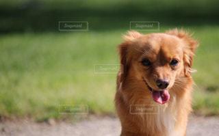 嬉しそうな犬の写真・画像素材[2319818]