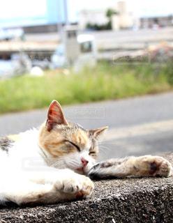 猫の昼寝の写真・画像素材[2320684]