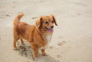 楽しそうな犬の写真・画像素材[2320685]