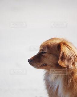 たそがれる犬の写真・画像素材[2320686]