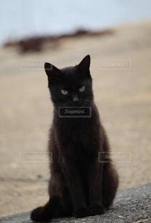 黒猫の写真・画像素材[2320770]