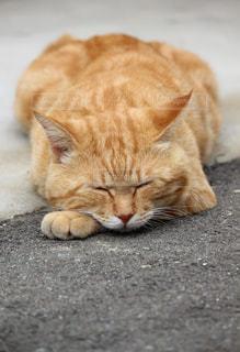猫の写真・画像素材[2320771]