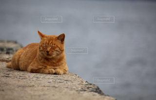 海辺でくつろぐ猫の写真・画像素材[2320772]