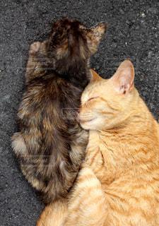 仲良しな猫達の写真・画像素材[2320773]
