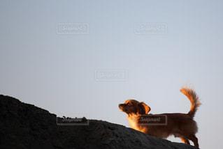 空を見上る犬の写真・画像素材[2320782]