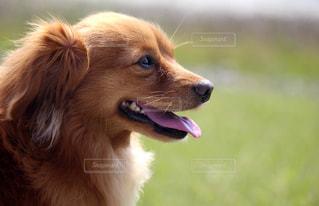 犬の横顔の写真・画像素材[2320783]