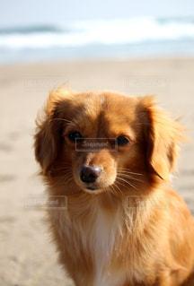 浜辺の犬の写真・画像素材[2320818]