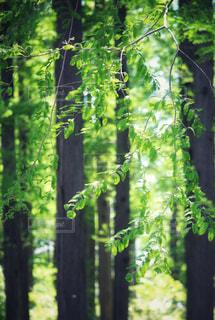 木々の緑の写真・画像素材[2325432]