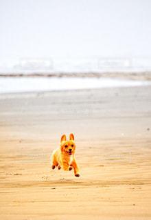 浜辺を走る犬の写真・画像素材[2329461]