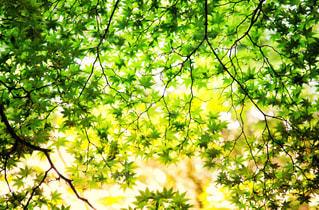 森の緑の写真・画像素材[2329473]