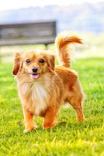 嬉しそうな犬の写真・画像素材[2331876]