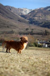 山をバックにした犬の写真・画像素材[2332630]
