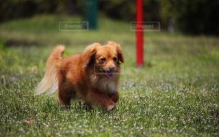 公園で遊ぶ犬の写真・画像素材[2333449]