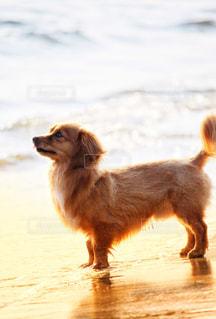 浜辺の犬の写真・画像素材[2340452]