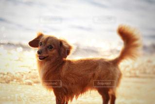 浜辺の犬の写真・画像素材[2340453]