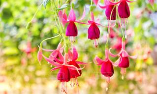 赤い花の写真・画像素材[2351194]