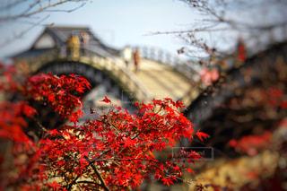 紅葉と錦帯橋の写真・画像素材[2353061]