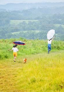 雨と女の子と犬の写真・画像素材[2404264]