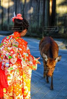 着物姿の女の子とシカの写真・画像素材[2443657]