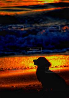 夕暮れの海と犬の写真・画像素材[2463096]