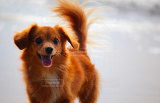 浜辺で遊ぶ犬の写真・画像素材[2504383]