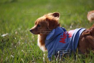 草原の犬の写真・画像素材[3024098]