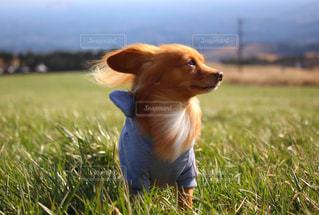 草原と犬の写真・画像素材[3024096]