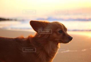 浜辺の犬の写真・画像素材[3024100]