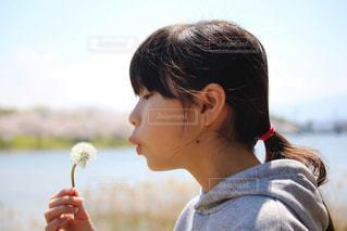 たんぽぽと女の子の写真・画像素材[3075277]
