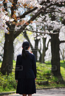桜と少女の写真・画像素材[3075281]