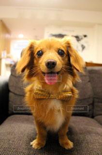 バースデー犬の写真・画像素材[3206525]