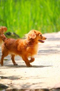 犬の横顔の写真・画像素材[3229453]