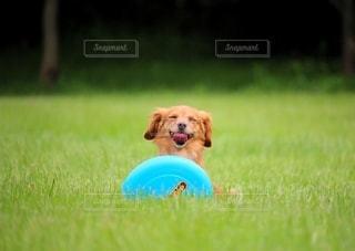 笑う犬の写真・画像素材[3374637]
