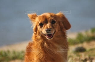 笑顔の犬の写真・画像素材[3796322]