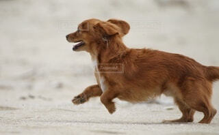 浜辺の犬の写真・画像素材[3969631]