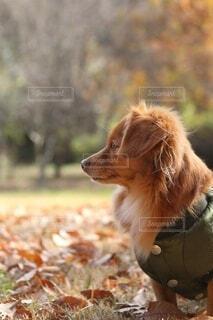 犬の横顔の写真・画像素材[3989967]