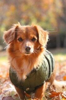 カメラ目線の犬の写真・画像素材[3989969]