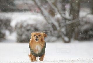 雪だ!の写真・画像素材[4056805]