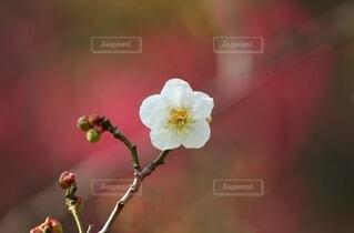 花のクローズアップの写真・画像素材[4132192]