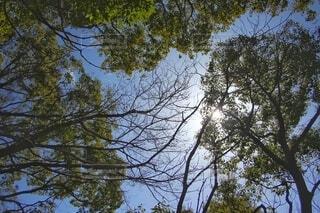 森の中の写真・画像素材[4207103]