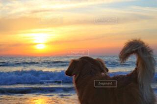 夕陽とわんこの写真・画像素材[4462845]