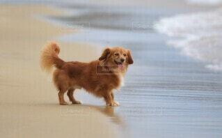 ビーチの犬の写真・画像素材[4651662]