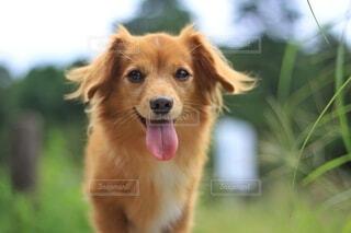 楽しそうな犬の表情の写真・画像素材[4801970]