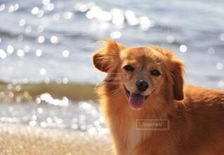笑顔の犬の写真・画像素材[4823206]