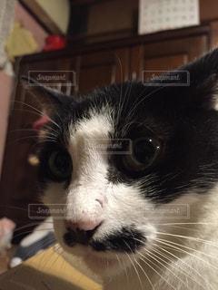 猫 - No.121475