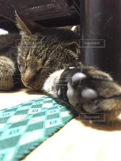 猫 - No.121476