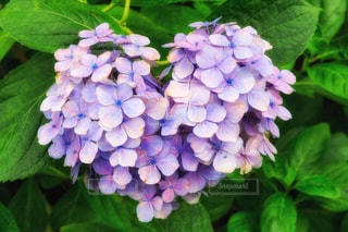 花のクローズアップの写真・画像素材[2315348]