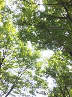 夏の写真・画像素材[2314853]