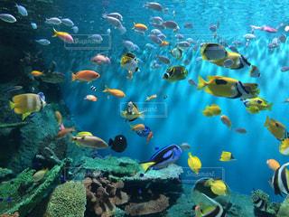 水の中の魚の群しの写真・画像素材[2337115]